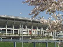 日産スタジアムと桜1