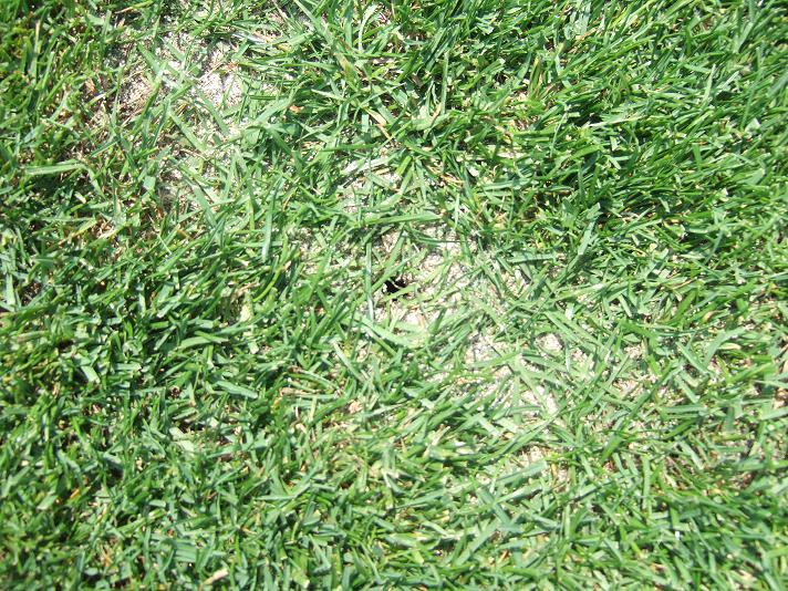傷ついた芝生