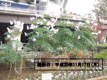 中央広場の一角にある花壇に咲いています